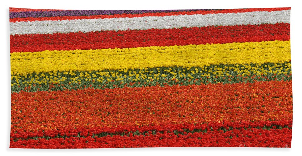 Colourful Beach Towel featuring the photograph Spring Flowers 13 by Arterra Picture Library