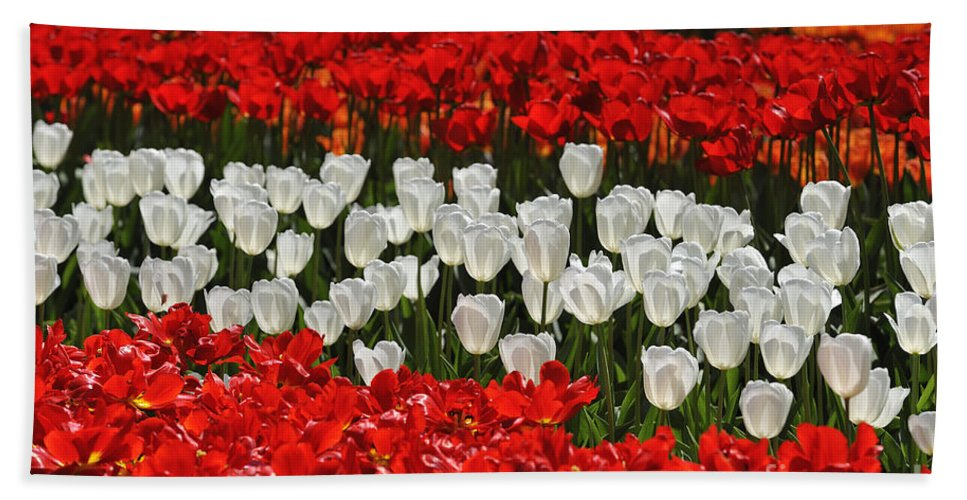 Colourful Beach Towel featuring the photograph Spring Flowers 16 by Arterra Picture Library
