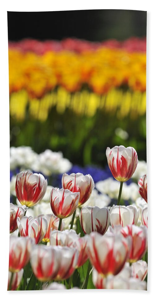 Colourful Beach Towel featuring the photograph Spring Flowers 2 by Arterra Picture Library