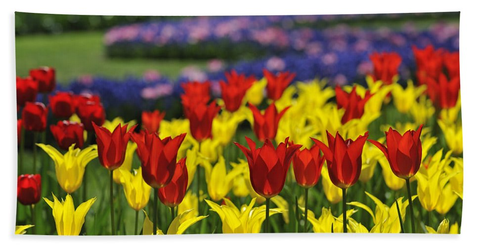 Colourful Beach Towel featuring the photograph Spring Flowers 4 by Arterra Picture Library