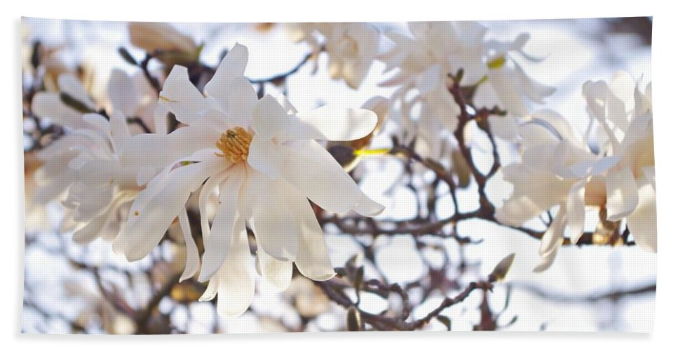 Magnolia Stellata Beach Towel featuring the photograph Spring Flowers by Sharon Popek