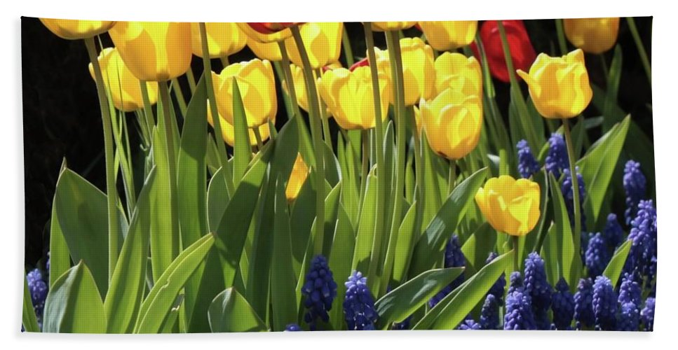 Spring Garden Beach Towel featuring the photograph Spring Garden Sunshine Square by Carol Groenen
