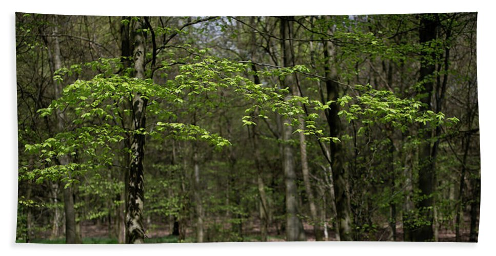 Spring Beach Towel featuring the photograph Spring Greenery by Gary Eason