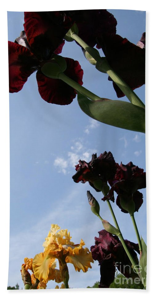 Flower Beach Towel featuring the photograph Spring Iris Skies by Susan Herber