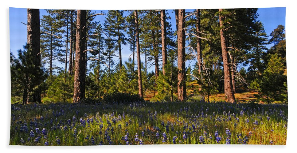 Spring Beach Towel featuring the photograph Spring Lupines In The Forest by Lynn Bauer