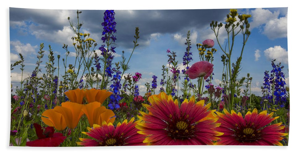 Appalachia Beach Towel featuring the photograph Spring Symphony by Debra and Dave Vanderlaan