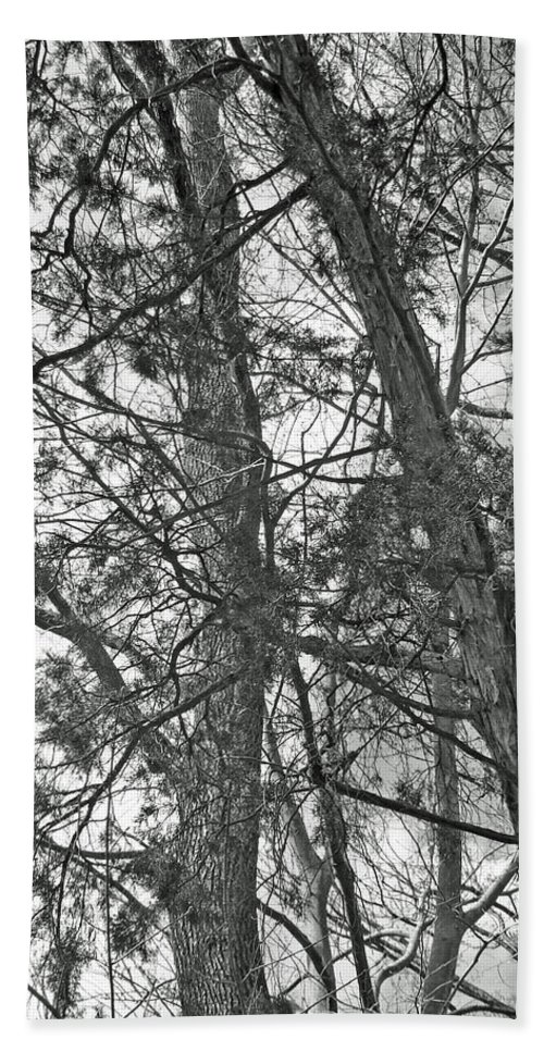 new Jersey Beach Towel featuring the photograph Springtime Woods - New Jesey Pine Barrens - Black And White by Mother Nature