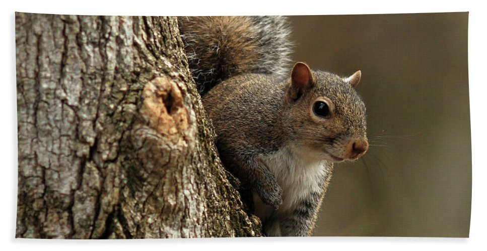 Squirrel Beach Towel featuring the photograph Squirrel by Douglas Stucky