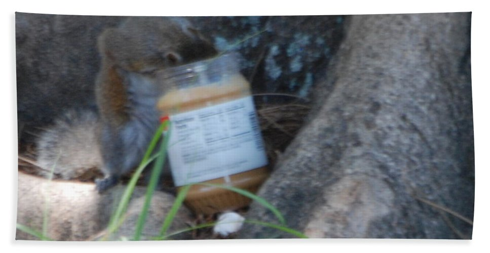 Head In Jar Of Peanut Butter.my Yard. Beach Towel featuring the photograph Squirrel Eating by Robert Floyd