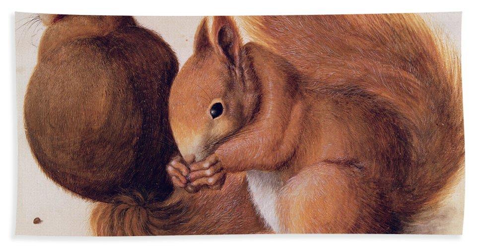 Les Ecureuils Beach Towel featuring the painting Squirrels by Albrecht Duerer