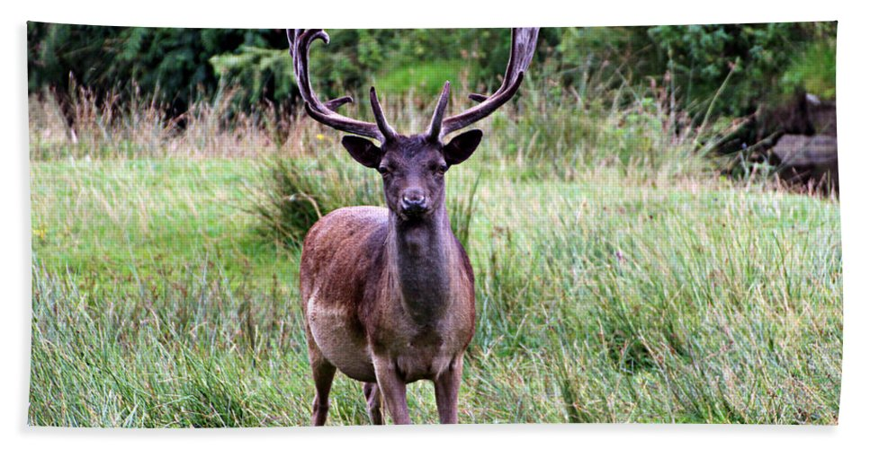 Deer Beach Towel featuring the photograph Stag by Tom Conway