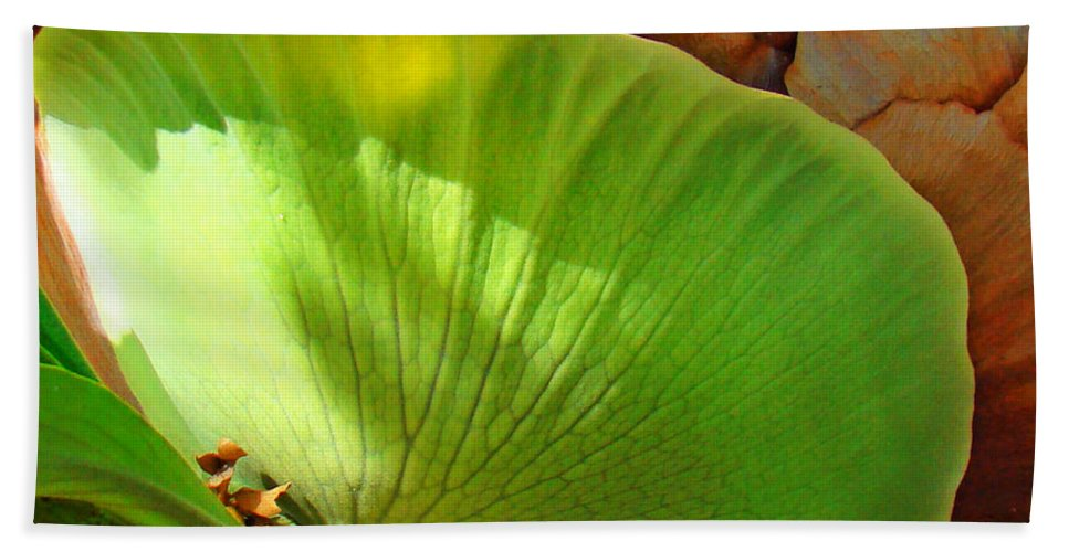 Staghorn Beach Towel featuring the photograph Staghorn Fern Butt by Nancy L Marshall