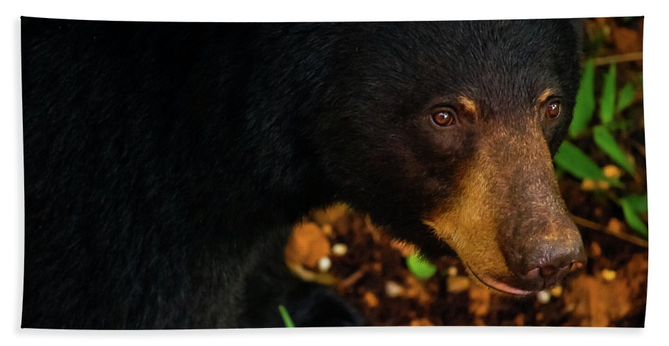 American Black Bear Beach Towel featuring the photograph Stalker by Christi Kraft