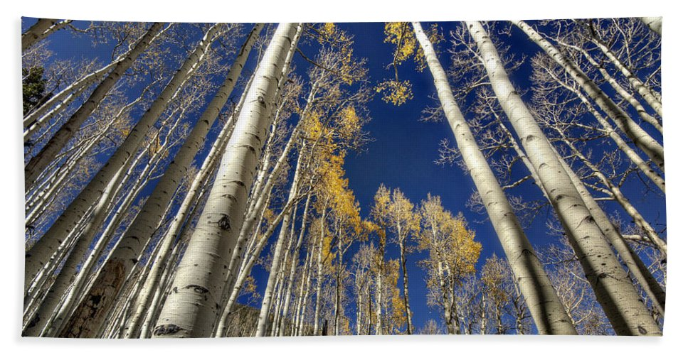 Aspens Beach Towel featuring the photograph Standing Tall by Saija Lehtonen