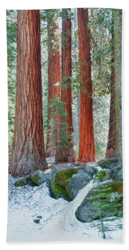 Hdr Beach Towel featuring the photograph Standing Tall - Sequoia National Park by Sandra Bronstein