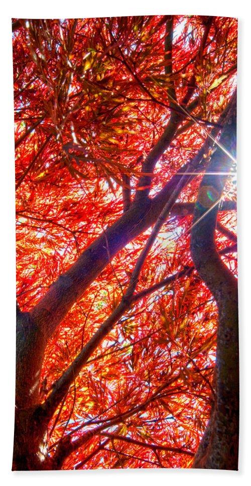 Japanese Maple Beach Towel featuring the photograph Star Light Thru Maple by Randall Branham