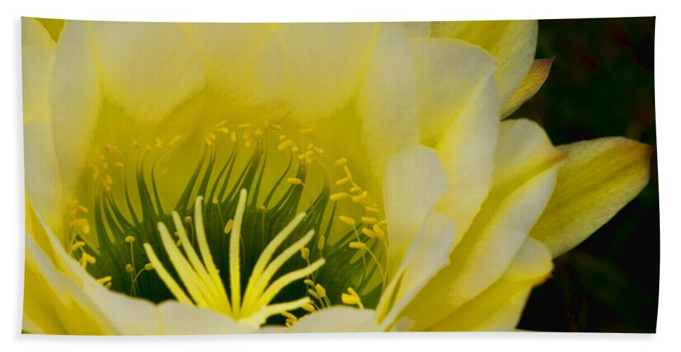 Yellow Beach Towel featuring the photograph Starburst by Lindley Johnson