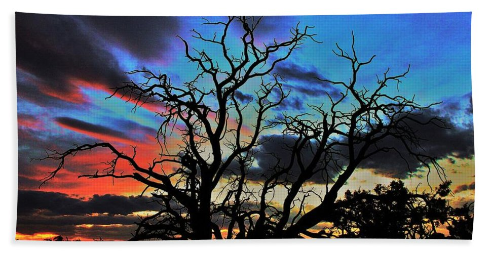 Tree Beach Towel featuring the photograph Stark by Benjamin Yeager