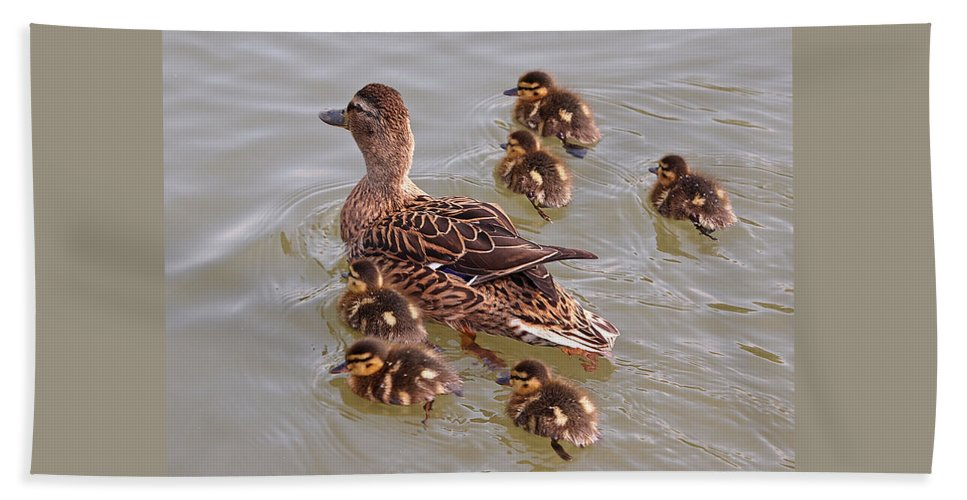 Ducklings Beach Towel featuring the photograph Stay Close To Me by Gill Billington