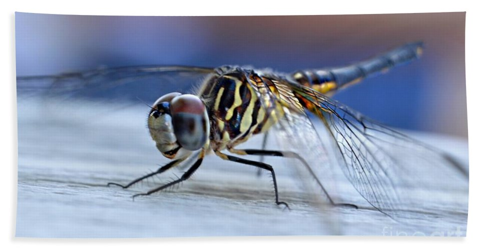 Tiger Dragonflies Beach Towel featuring the photograph Stop By Tiger Dragon Fly by Peggy Franz
