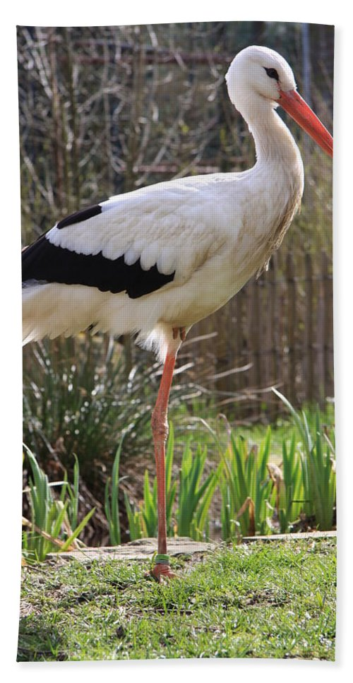 Stork Beach Towel featuring the photograph Stork by Christiane Schulze Art And Photography