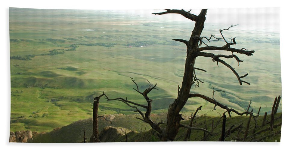 Bear Butte Beach Towel featuring the photograph Stormy Tree by Mary Carol Story