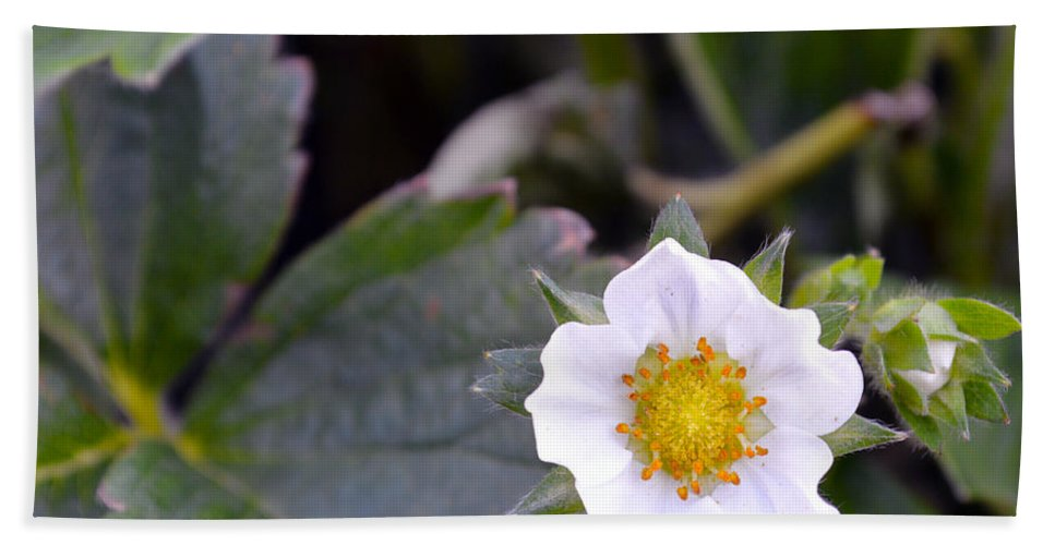 Strawberry Beach Towel featuring the photograph Strawberry Flower by Brent Dolliver