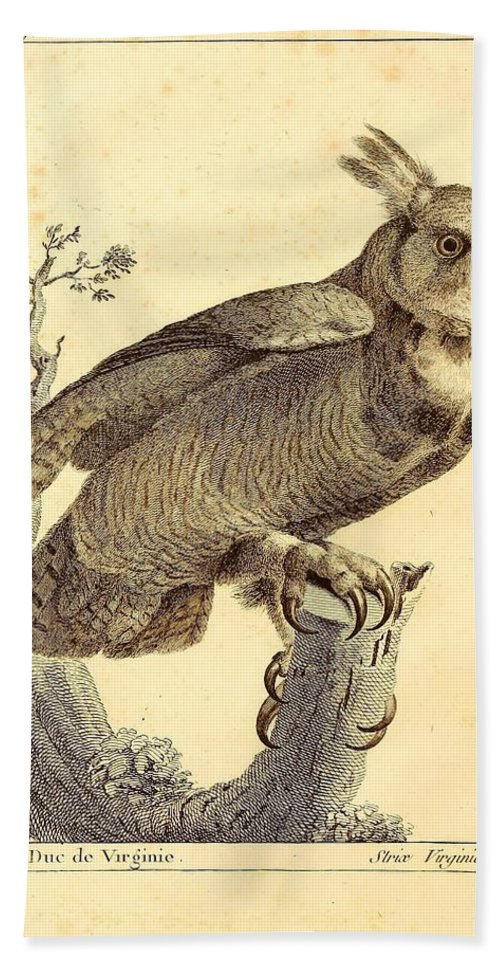Audubon Beach Towel featuring the painting Strix Virginiana Owl by Unknown