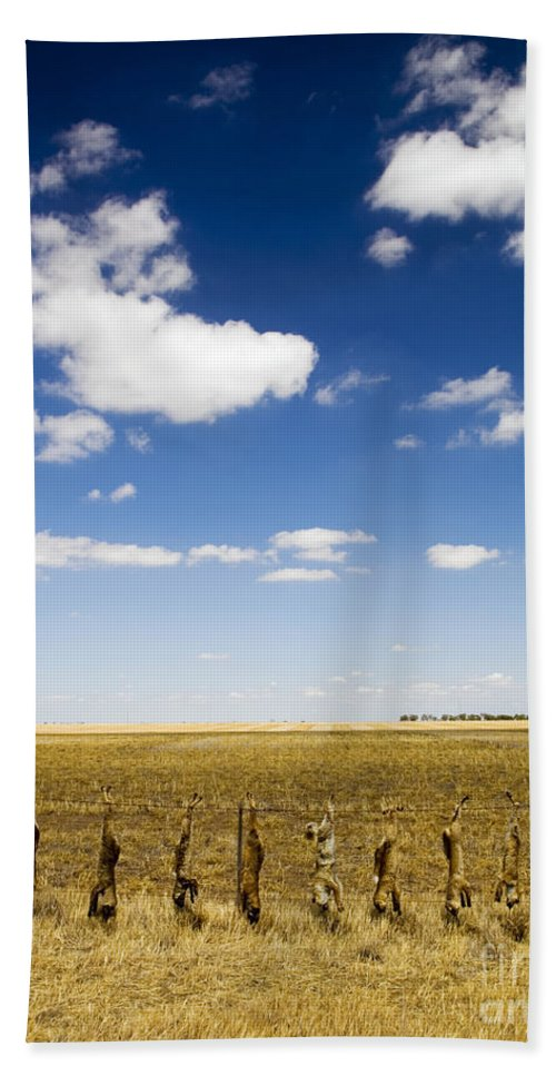 Agriculture Beach Towel featuring the photograph Strung Up Foxes by Tim Hester