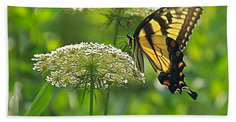Papilio Glaucus Beach Towel featuring the photograph Sultry Summer Day by Byron Varvarigos