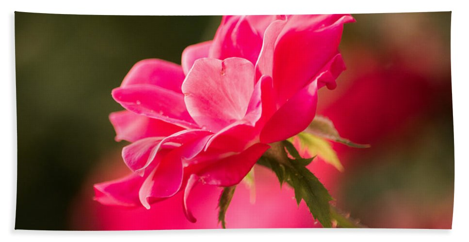 Summer Rose Beach Towel For Sale By Parker Cunningham