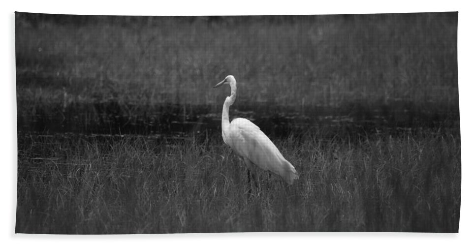 Summer's Night Egret Beach Towel featuring the photograph Summer's Night Egret by Maria Urso