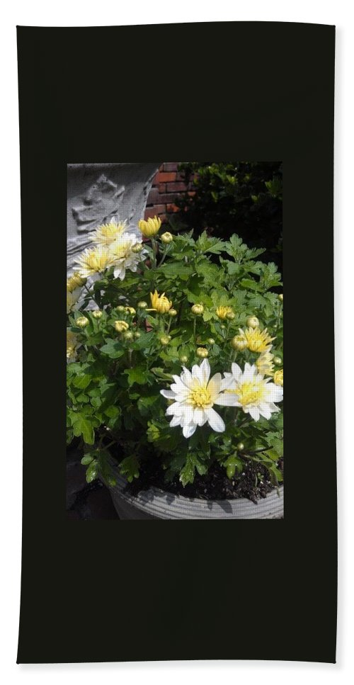 Flowers Beach Towel featuring the photograph Sun Burst by Melissa Borchardt