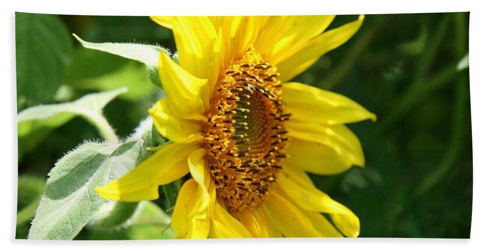 Sunflower Beach Towel featuring the photograph Sun Dancer by Neal Eslinger