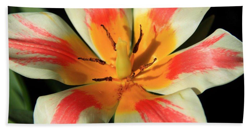 Flower Beach Towel featuring the photograph Flower Of Velvet by Aidan Moran
