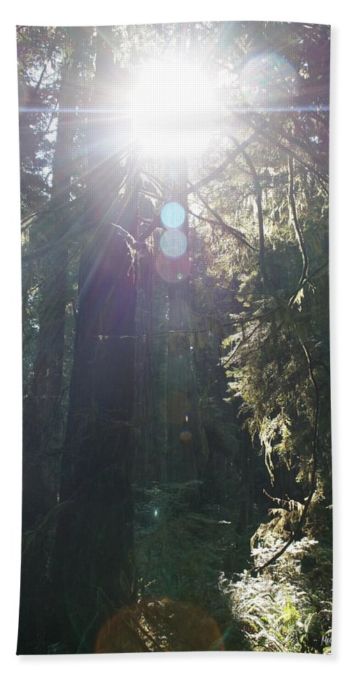 Sun Beach Towel featuring the photograph Sun Penetrates The Redwood Forest by Mick Anderson