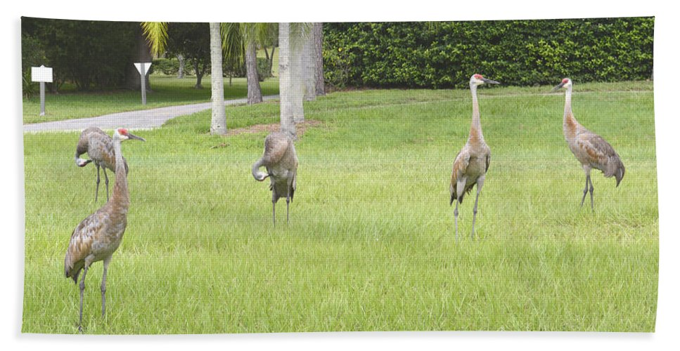 Sandhill Crane Beach Towel featuring the photograph Sunday Afternoon by To-Tam Gerwe