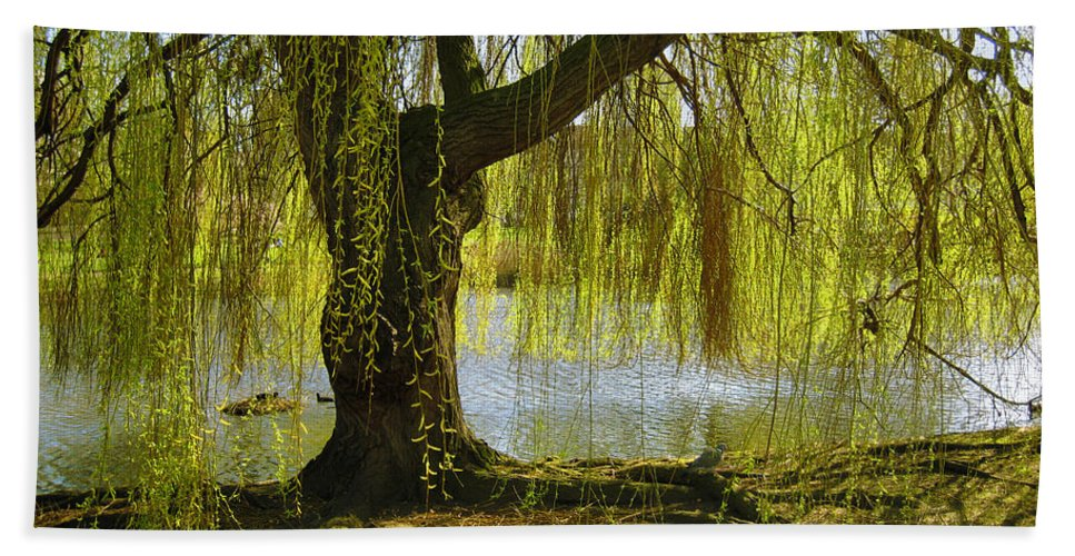 Tree Beach Towel featuring the photograph Sunday In The Park by Madeline Ellis