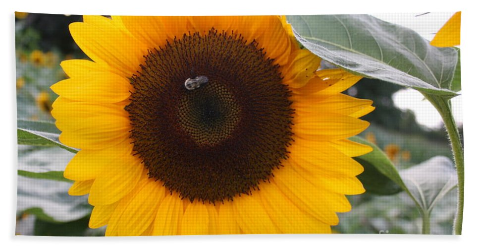 Sunflower Beach Towel featuring the photograph Sunflower And Bee by Dora Sofia Caputo Photographic Design and Fine Art