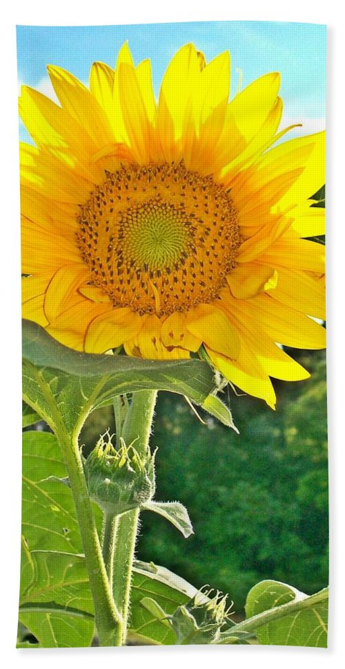 Sunflower Beach Towel featuring the photograph Sunflower Dreams by Sara Raber