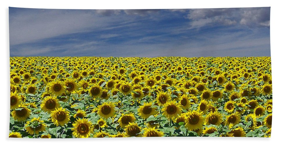 Botanicals Beach Towel featuring the digital art Sunflowers Forever by Ernie Echols