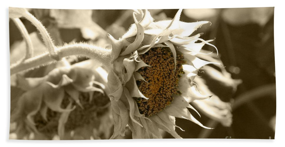 Sunflower Beach Towel featuring the photograph Sunflowers by Lali Kacharava