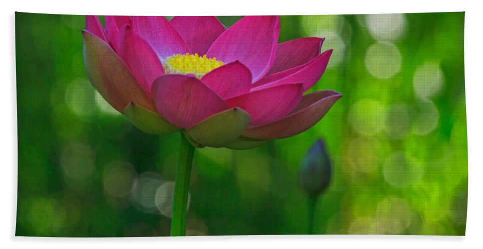 California Beach Towel featuring the photograph Sunlight On Lotus Flower by Beth Sargent