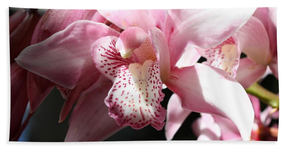 Pink Beach Towel featuring the photograph Sunlight On Pink Orchid by Carol Groenen