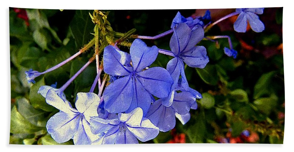 Garden Beach Towel featuring the painting Sunlight On The Blues by RC DeWinter