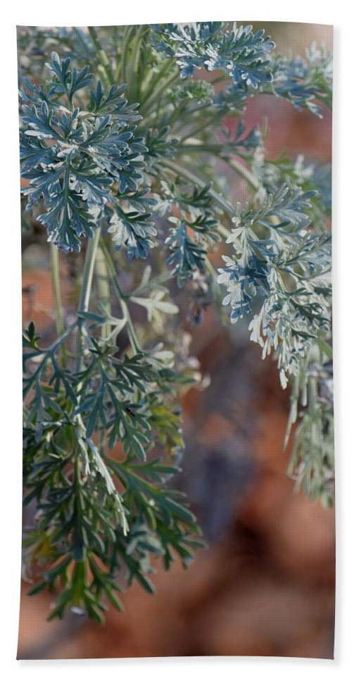 Herbs Beach Towel featuring the photograph Sunlit Herb by Maria Urso
