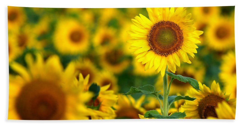 Yellow Beach Towel featuring the photograph Sunny Delight by Bill Pevlor