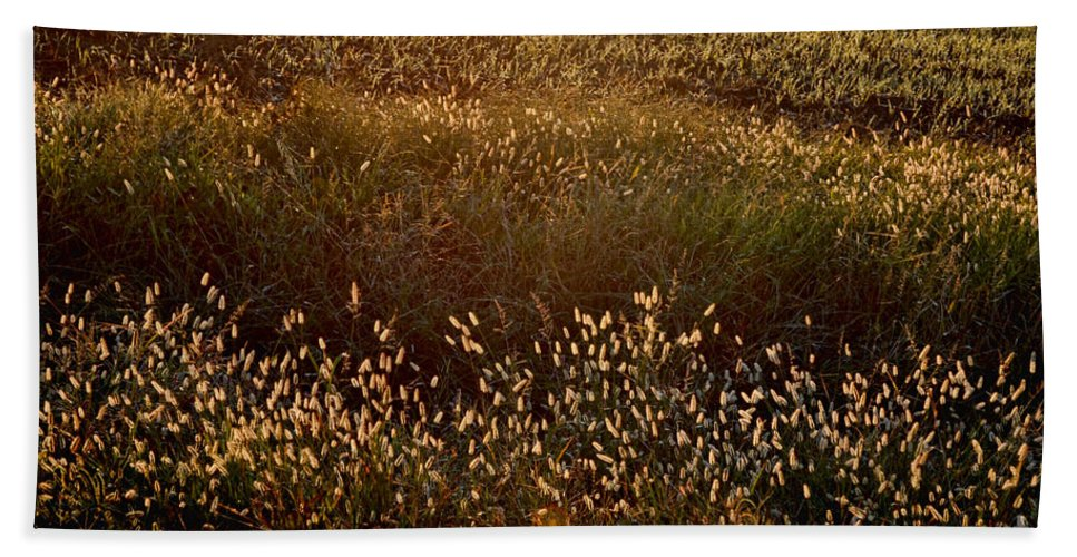 Nature Beach Towel featuring the photograph Sunrise On Wild Grass by Debbie Portwood