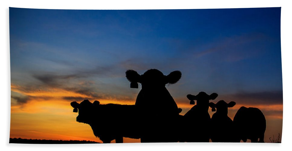 Cattle Beach Towel featuring the photograph Sunset Serenade by Kelli Brown