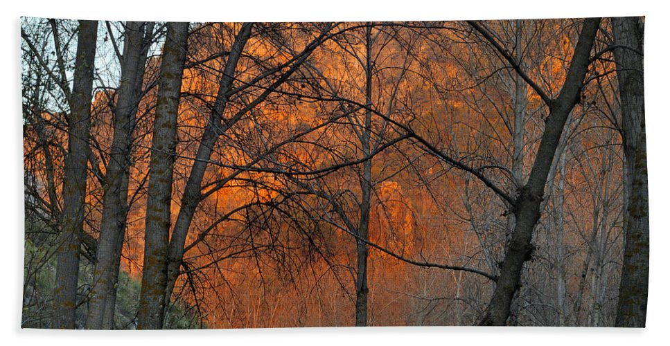 Trees Beach Towel featuring the photograph Sunset Through The Forest by Guido Montanes Castillo